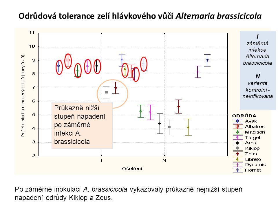 Odrůdová tolerance zelí hlávkového vůči Alternaria brassicicola Po záměrné inokulaci A.