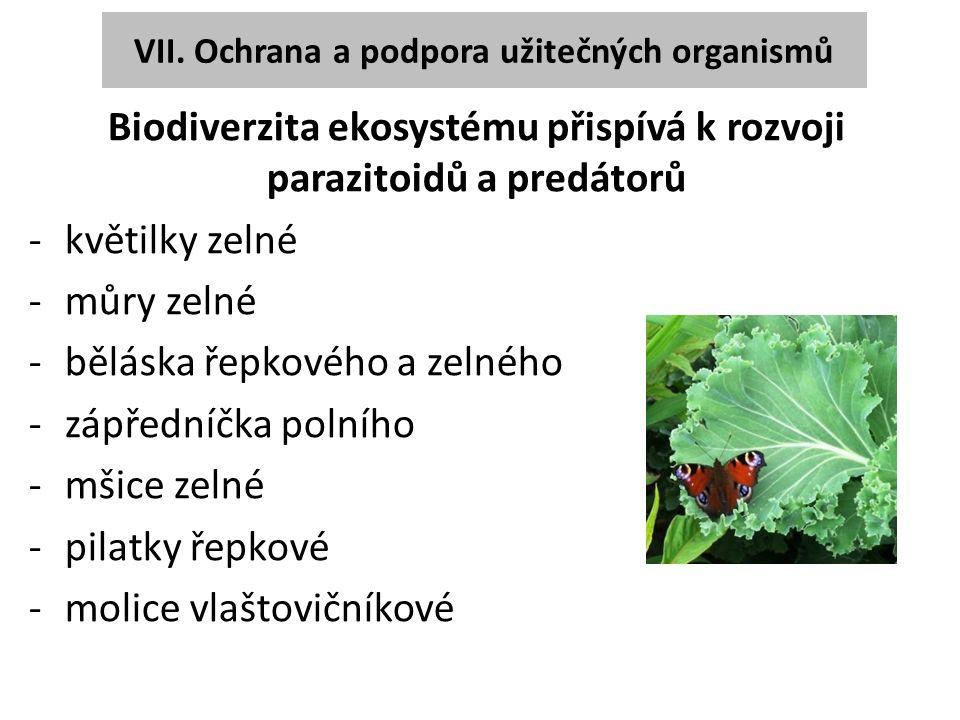 VII. Ochrana a podpora užitečných organismů Biodiverzita ekosystému přispívá k rozvoji parazitoidů a predátorů -květilky zelné -můry zelné -běláska ře