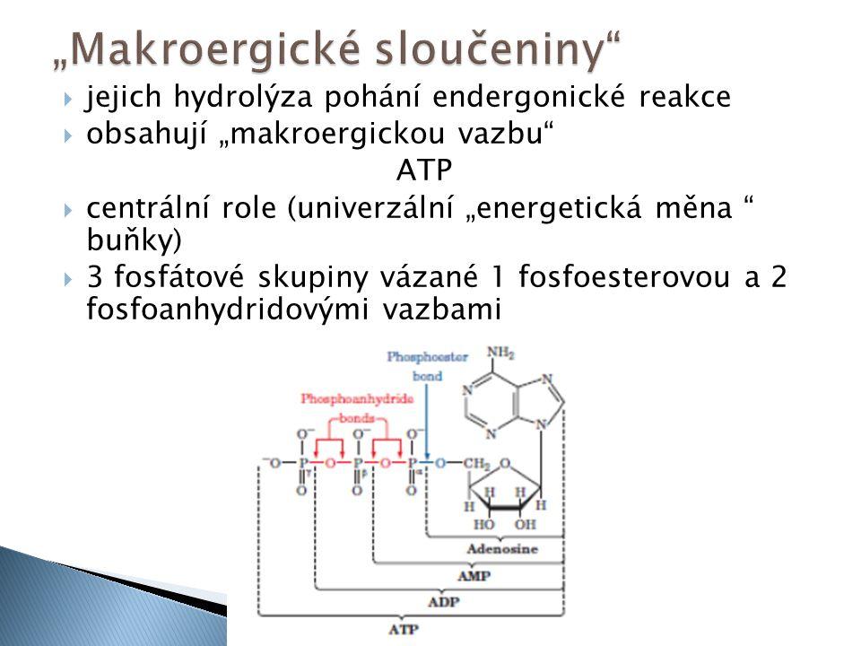 """ jejich hydrolýza pohání endergonické reakce  obsahují """"makroergickou vazbu ATP  centrální role (univerzální """"energetická měna buňky)  3 fosfátové skupiny vázané 1 fosfoesterovou a 2 fosfoanhydridovými vazbami"""