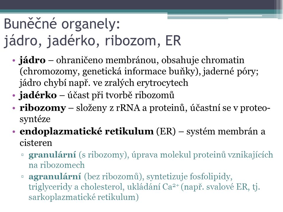 Buněčné organely: jádro, jadérko, ribozom, ER jádro – ohraničeno membránou, obsahuje chromatin (chromozomy, genetická informace buňky), jaderné póry; jádro chybí např.