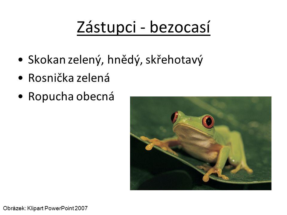 Zástupci - bezocasí Skokan zelený, hnědý, skřehotavý Rosnička zelená Ropucha obecná Obrázek: Klipart PowerPoint 2007