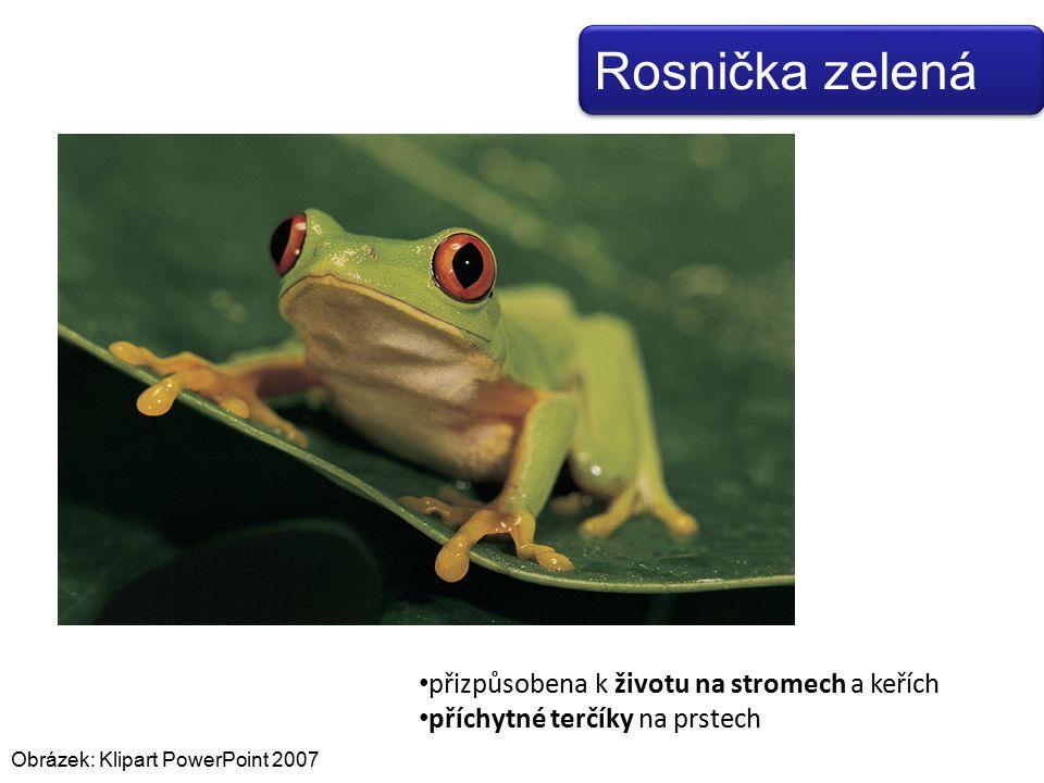 Obrázek: Klipart PowerPoint 2007 přizpůsobena k životu na stromech a keřích příchytné terčíky na prstech Rosnička zelená