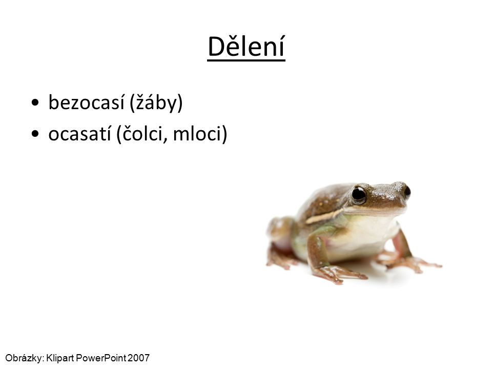 Dělení bezocasí (žáby) ocasatí (čolci, mloci) Obrázky: Klipart PowerPoint 2007