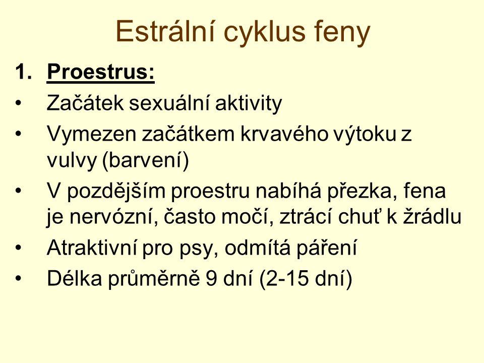 Estrální cyklus feny 2.Estrus: Začátek svolnosti k páření Fena zaujímá postoj vhodný pro páření, ocas na straně, prohýbání zad Přezka až dvojnásobně zvětšená, sliznice pochvy lesklá a zduřelá Výtok se mění na červeno-hnědou až růžovou Dochází k ovulaci (během prvních 5 dnů estru) Ovuluje několik folikulů  trvání cca 24 hod Uvolňují se primární oocyty, zrání během transportu  oplozeníschopné až 2-3 dny po ovulaci!!.