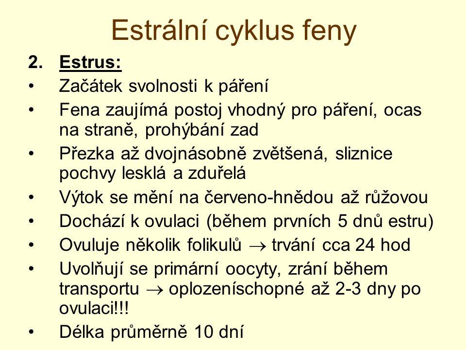 Estrální cyklus feny 3.Diestrus: formace žlutého tělíska, produkce progesteronu fena odmítá krytí, mizí otok ochodu a výtok délka průměrně 65 dní = délka březosti falešná březost – životnost žlutého tělíska, citlivost endometria na progesteron 4.Anestrus: pohlavní klid průměrně 120 dní (40-270 dní)