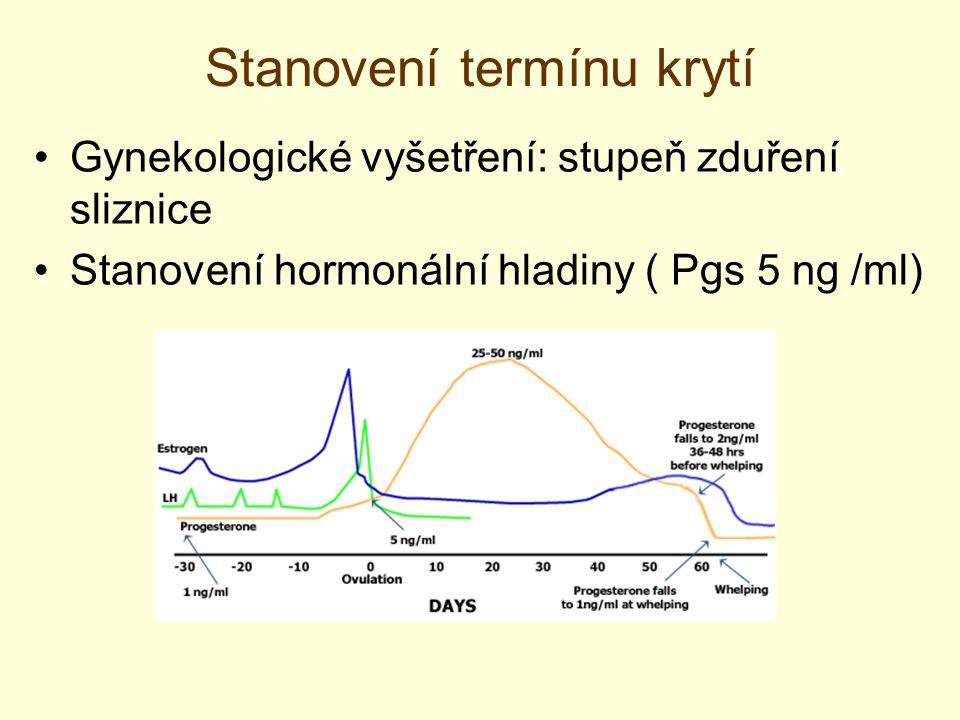 Stanovení termínu krytí Gynekologické vyšetření: stupeň zduření sliznice Stanovení hormonální hladiny ( Pgs 5 ng /ml)