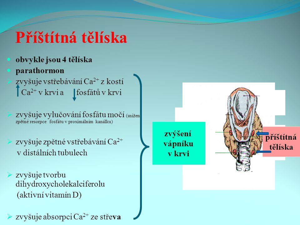 Příštítná tělíska obvykle jsou 4 tělíska parathormon  zvyšuje vstřebávání Ca 2+ z kostí Ca 2+ v krvi a fosfátů v krvi  zvyšuje vylučování fosfátu močí (snížení zpětné resorpce fosfátu v proximálním kanálku)  zvyšuje zpětné vstřebávání Ca 2+ v distálních tubulech  zvyšuje tvorbu dihydroxycholekalciferolu (aktivní vitamín D)  zvyšuje absorpci Ca 2+ ze střeva příštítná tělíska zvýšení vápníku v krvi