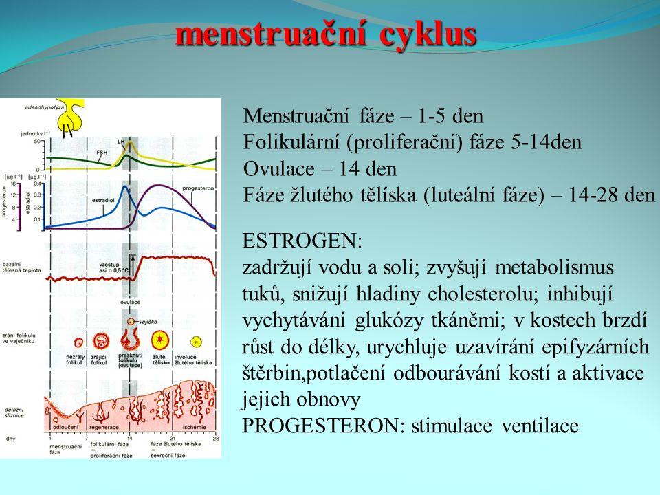 menstruační cyklus Menstruační fáze – 1-5 den Folikulární (proliferační) fáze 5-14den Ovulace – 14 den Fáze žlutého tělíska (luteální fáze) – 14-28 den ESTROGEN: zadržují vodu a soli; zvyšují metabolismus tuků, snižují hladiny cholesterolu; inhibují vychytávání glukózy tkáněmi; v kostech brzdí růst do délky, urychluje uzavírání epifyzárních štěrbin,potlačení odbourávání kostí a aktivace jejich obnovy PROGESTERON: stimulace ventilace