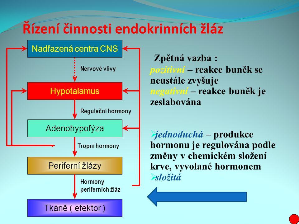 Řízení činnosti endokrinních žláz Zpětná vazba : pozitivní – reakce buněk se neustále zvyšuje negativní – reakce buněk je zeslabována  jednoduchá – produkce hormonu je regulována podle změny v chemickém složení krve, vyvolané hormonem  složitá Nadřazená centra CNS Hypotalamus Adenohypofýza Periferní žlázy Tkáně ( efektor ) Hormony periferních žláz Tropní hormony Regulační hormony Nervové vlivy