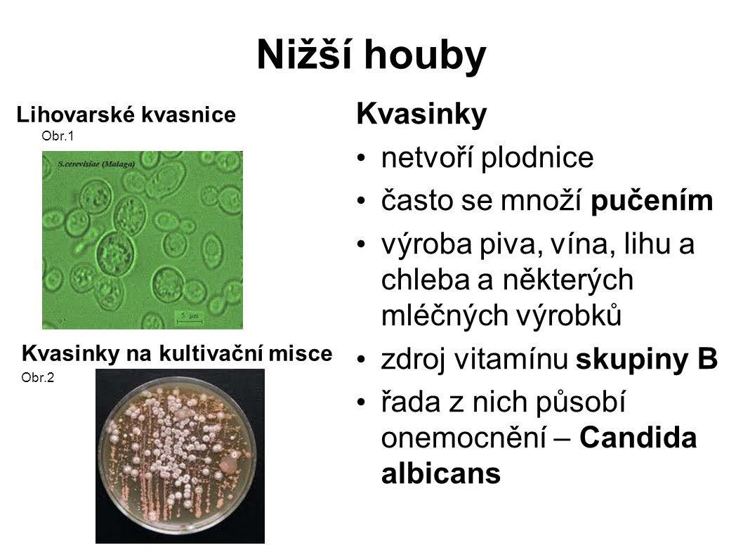 Nižší houby Obr.3 Obr.4 Štětičkovec –Penicillium byl z něj izolován penicilín řada jeho druhů se používá k výrobě sýrů některé druhy znehodnocují potraviny Obr.5 Sir Alexander Fleming 1881 – 1955 objevitel penicilínu 1928 1945 – Nobelova cena