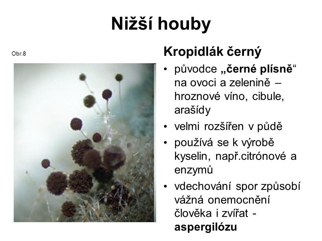 Nižší houby Padlí jabloňové Obr.9 Padlí angreštové Obr.10 Padlí houbová choroba napadá rostliny při suchém a teplém počasí tvoří bílé povlaky