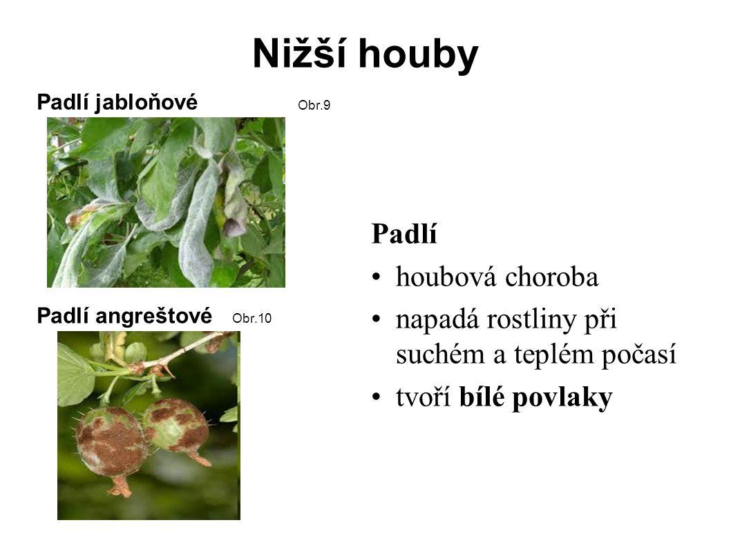 Nižší houby Monilióza = hniloba jádrovin onemocnění ovocných stromů způsobeno houbami rodu Monilia Obr.11 Rzi jsou to houby napadají rostliny Rez na listu pšenice Obr.12