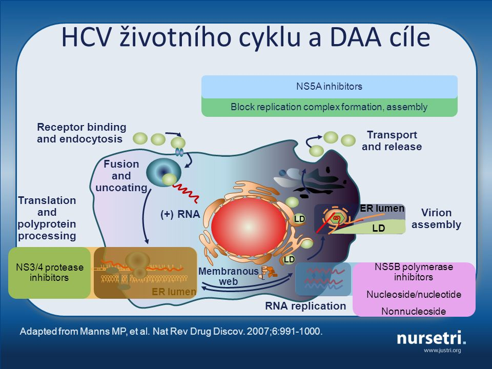 HCV životního cyklu a DAA cíle Adapted from Manns MP, et al. Nat Rev Drug Discov. 2007;6:991-1000. Receptor binding and endocytosis Fusion and uncoati