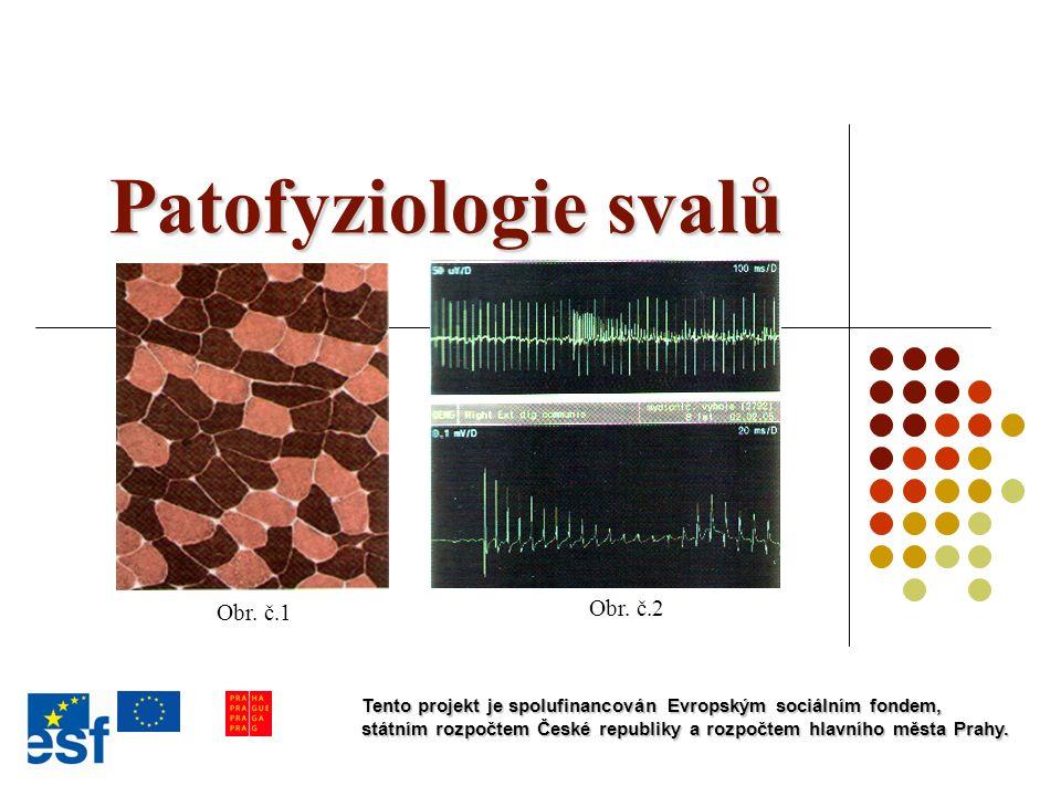 Biochemické složení a fyzikální vlastnosti kosterního svalu Složení svalu:  75% vody  20% bílkovin  1% anorganických látek  zbytek: svalový glykogen, ATP, CP, myoglobin (svalové barvivo) Fyzikální vlastnosti svalu:  pružnost (při zatížení se protáhne, poté se vrací na původní délku)  pevnost (je mezi 4-12 kg na 1cm 2 kolmého průřezu svalem) Fyziologické vlastnosti svalu:  dráždivost (schopnost reagovat sval na vnější podněty)  stažlivost (schopnost svalu se stahovat)