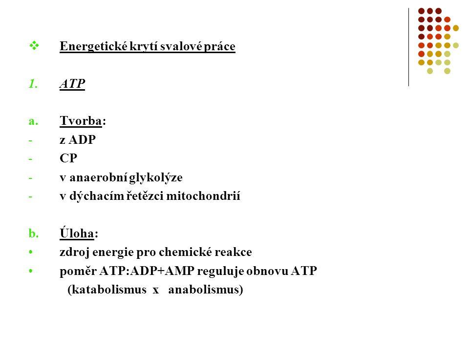  Energetické krytí svalové práce 1.ATP a.Tvorba: -z ADP -CP -v anaerobní glykolýze -v dýchacím řetězci mitochondrií b.Úloha: zdroj energie pro chemické reakce poměr ATP:ADP+AMP reguluje obnovu ATP (katabolismus x anabolismus)