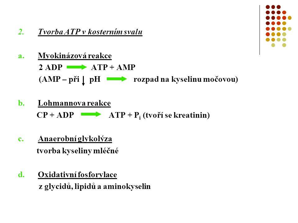 2.Tvorba ATP v kosterním svalu a.Myokinázová reakce 2 ADP ATP + AMP (AMP – při pH rozpad na kyselinu močovou) b.Lohmannova reakce CP + ADP ATP + P i (tvoří se kreatinin) c.Anaerobní glykolýza tvorba kyseliny mléčné d.Oxidativní fosforylace z glycidů, lipidů a aminokyselin