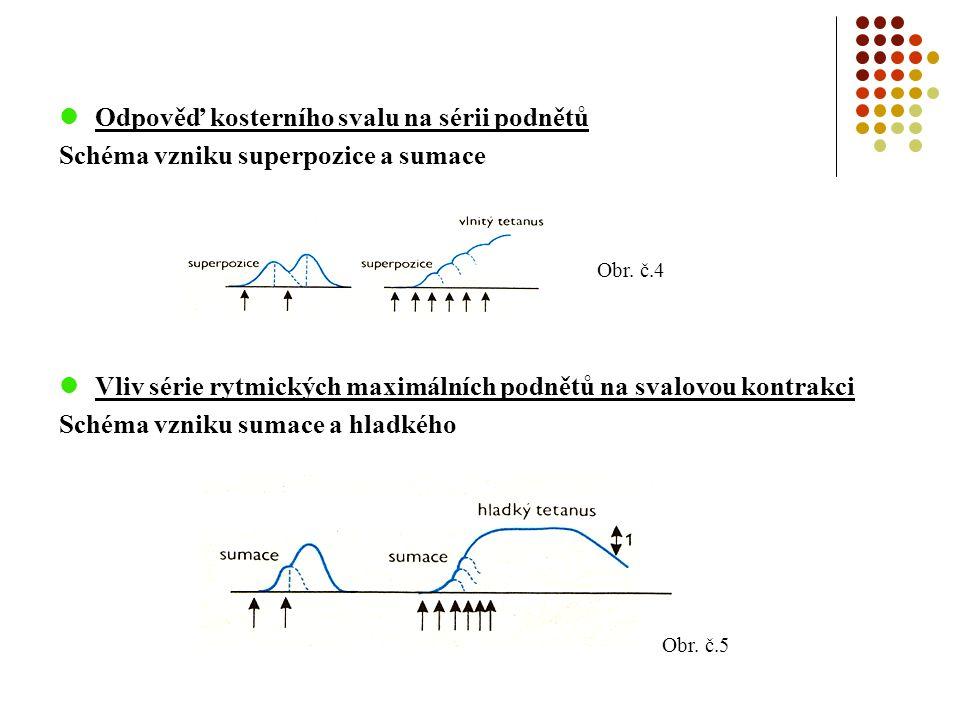 Proteiny svalové membrány -Na svalové membráně probíhají velmi složité děj -Ty jsou zajišťovány vzájemně propojenými proteinovými komplexy Dystrofinový glykoproteinový komplex -udržuje stabilitu svalové membrány -zahrnuje: 1.dystrofin, syntrofiny a dystrobrevin – jsou na intracelulární straně sarkolemy 2.dystroglykany a sarkoglykany – procházejí membránou Obr.