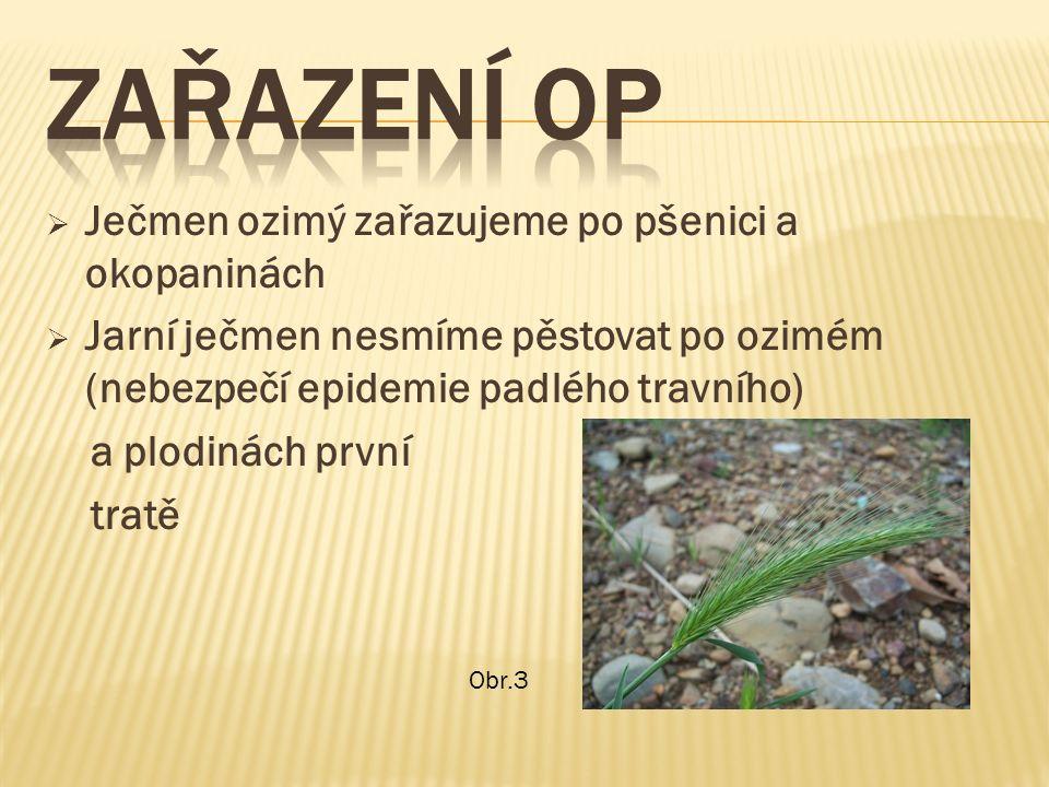  Ječmen ozimý zařazujeme po pšenici a okopaninách  Jarní ječmen nesmíme pěstovat po ozimém (nebezpečí epidemie padlého travního) a plodinách první tratě Obr.3