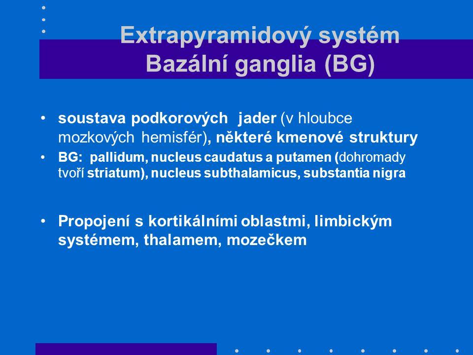 Extrapyramidový systém Bazální ganglia (BG) soustava podkorových jader (v hloubce mozkových hemisfér), některé kmenové struktury BG: pallidum, nucleus caudatus a putamen (dohromady tvoří striatum), nucleus subthalamicus, substantia nigra Propojení s kortikálními oblastmi, limbickým systémem, thalamem, mozečkem