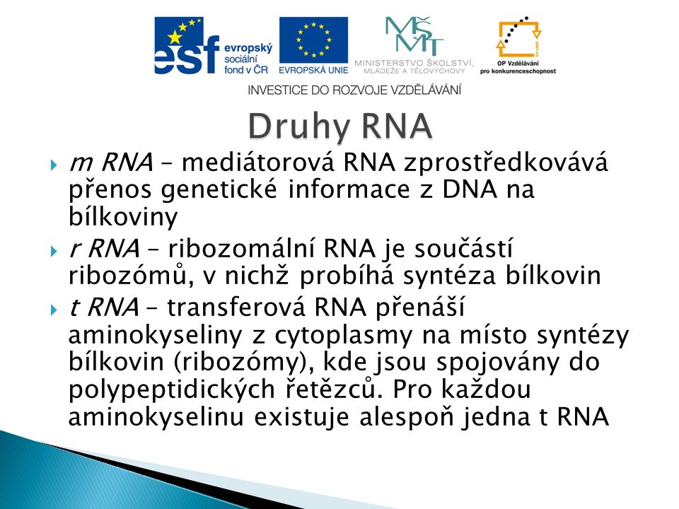  m RNA – mediátorová RNA zprostředkovává přenos genetické informace z DNA na bílkoviny  r RNA – ribozomální RNA je součástí ribozómů, v nichž probíhá syntéza bílkovin  t RNA – transferová RNA přenáší aminokyseliny z cytoplasmy na místo syntézy bílkovin (ribozómy), kde jsou spojovány do polypeptidických řetězců.