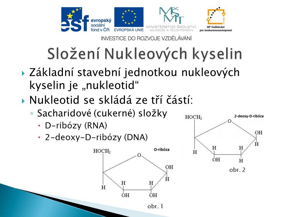 """ Základní stavební jednotkou nukleových kyselin je """"nukleotid  Nukleotid se skládá ze tří částí: ◦ Sacharidové (cukerné) složky  D-ribózy (RNA)  2-deoxy-D-ribózy (DNA) obr."""