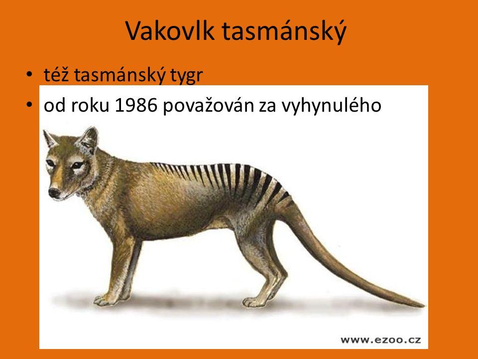 Vakovlk tasmánský též tasmánský tygr od roku 1986 považován za vyhynulého