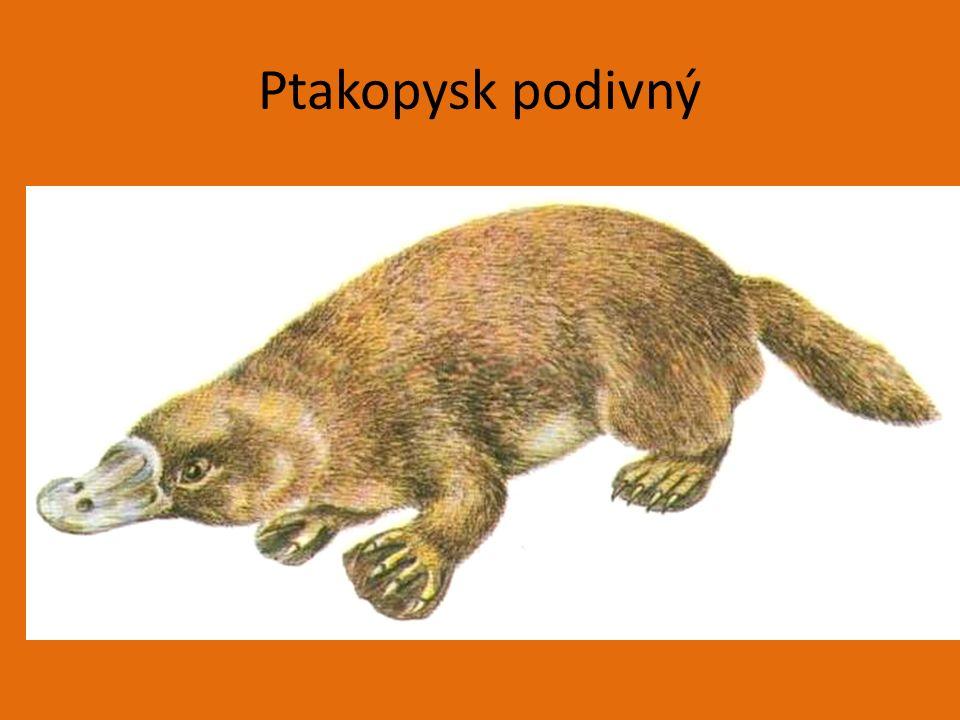 Vakovlk tasmánský.Www.google.cz [online]. 2010 [cit.