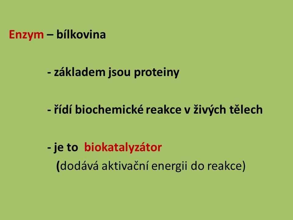 Enzym – bílkovina - základem jsou proteiny - řídí biochemické reakce v živých tělech - je to biokatalyzátor (dodává aktivační energii do reakce)