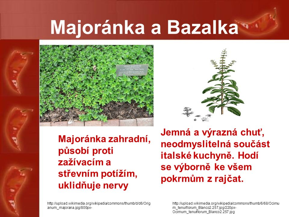 Majoránka a Bazalka Majoránka zahradní, působí proti zažívacím a střevním potížím, uklidňuje nervy Jemná a výrazná chuť, neodmyslitelná součást italské kuchyně.