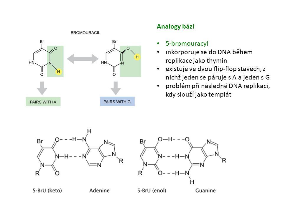 Analogy bází 5-bromouracyl inkorporuje se do DNA během replikace jako thymin existuje ve dvou flip-flop stavech, z nichž jeden se páruje s A a jeden s G problém při následné DNA replikaci, kdy slouží jako templát