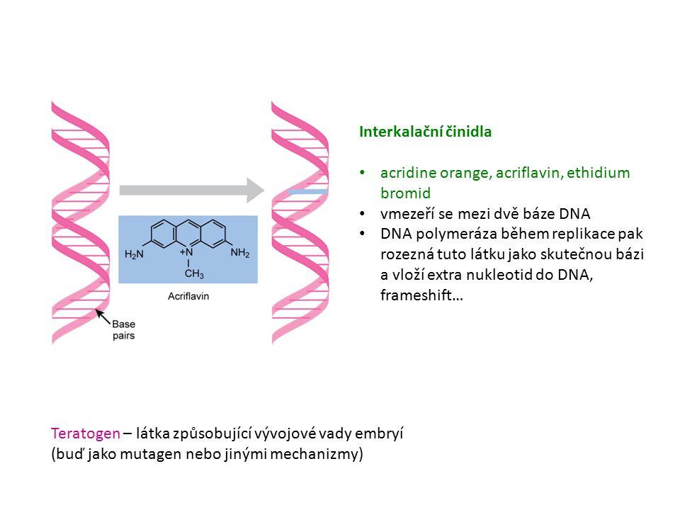 Interkalační činidla acridine orange, acriflavin, ethidium bromid vmezeří se mezi dvě báze DNA DNA polymeráza během replikace pak rozezná tuto látku jako skutečnou bázi a vloží extra nukleotid do DNA, frameshift… Teratogen – látka způsobující vývojové vady embryí (buď jako mutagen nebo jinými mechanizmy)