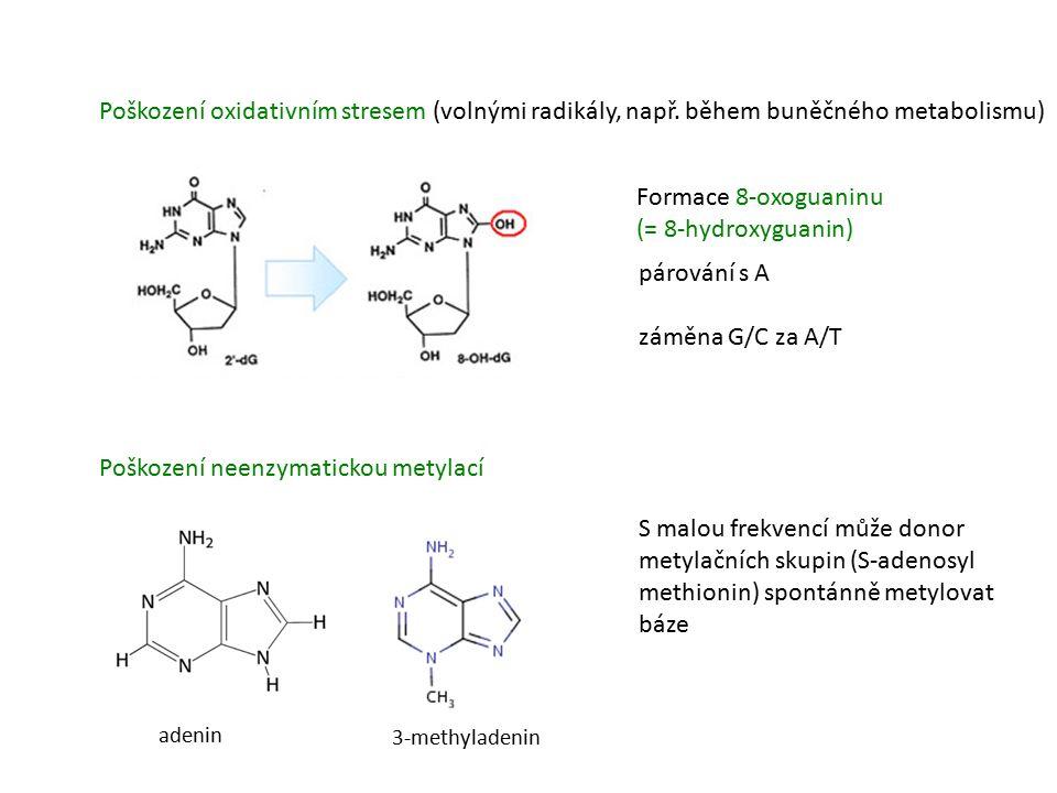 Poškození oxidativním stresem (volnými radikály, např.