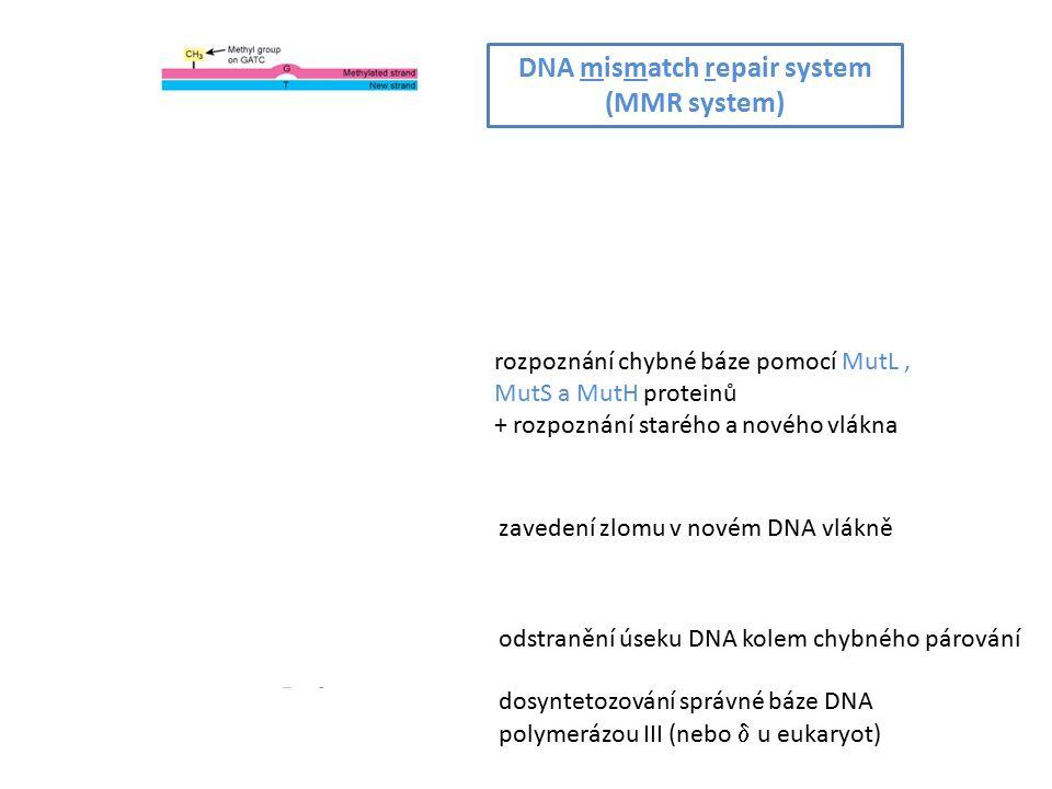 DNA mismatch repair system (MMR system) rozpoznání chybné báze pomocí MutL, MutS a MutH proteinů + rozpoznání starého a nového vlákna zavedení zlomu v novém DNA vlákně odstranění úseku DNA kolem chybného párování dosyntetozování správné báze DNA polymerázou III (nebo  u eukaryot)