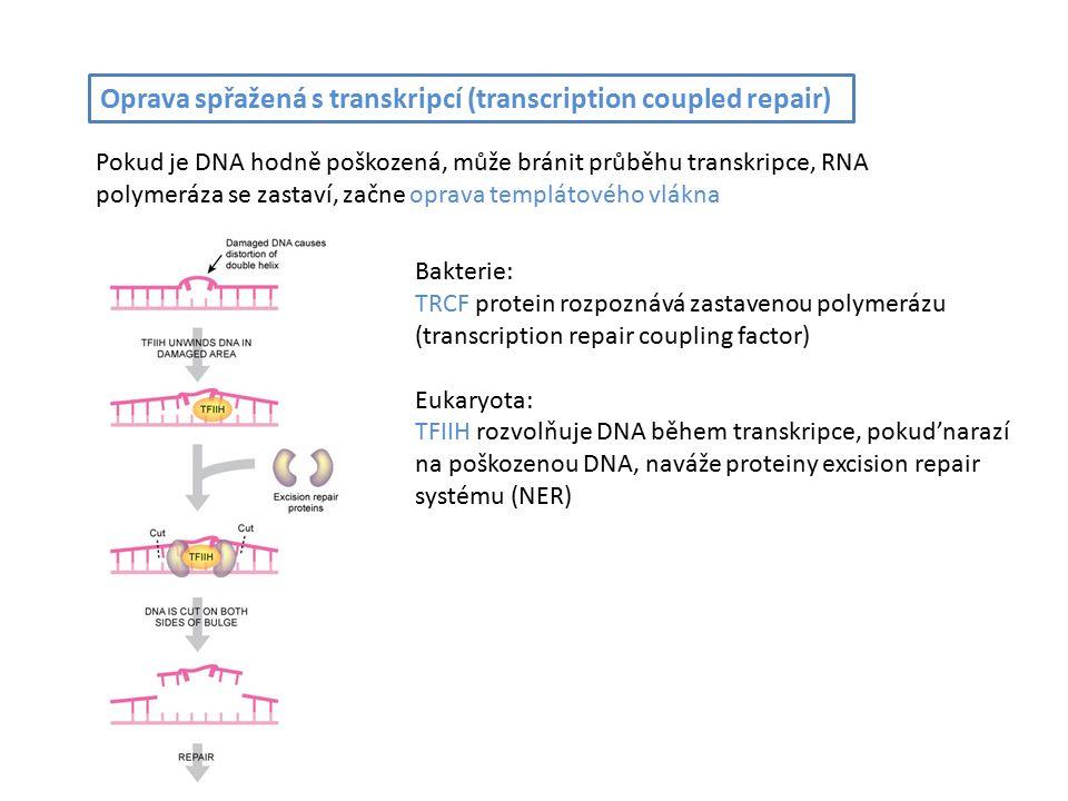 Oprava spřažená s transkripcí (transcription coupled repair) Pokud je DNA hodně poškozená, může bránit průběhu transkripce, RNA polymeráza se zastaví, začne oprava templátového vlákna Bakterie: TRCF protein rozpoznává zastavenou polymerázu (transcription repair coupling factor) Eukaryota: TFIIH rozvolňuje DNA během transkripce, pokud'narazí na poškozenou DNA, naváže proteiny excision repair systému (NER)