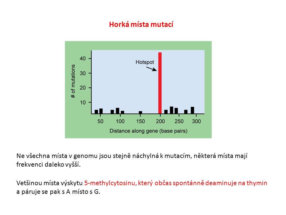 Horká místa mutací Ne všechna místa v genomu jsou stejně náchylná k mutacím, některá místa mají frekvenci daleko vyšší.