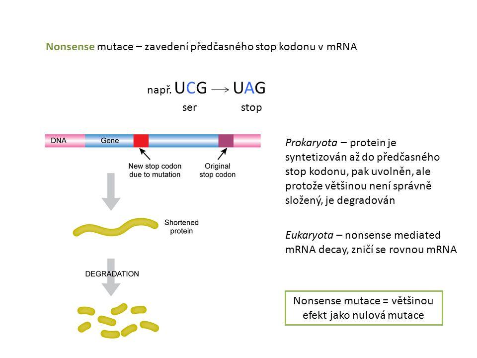 Nonsense mutace – zavedení předčasného stop kodonu v mRNA např.