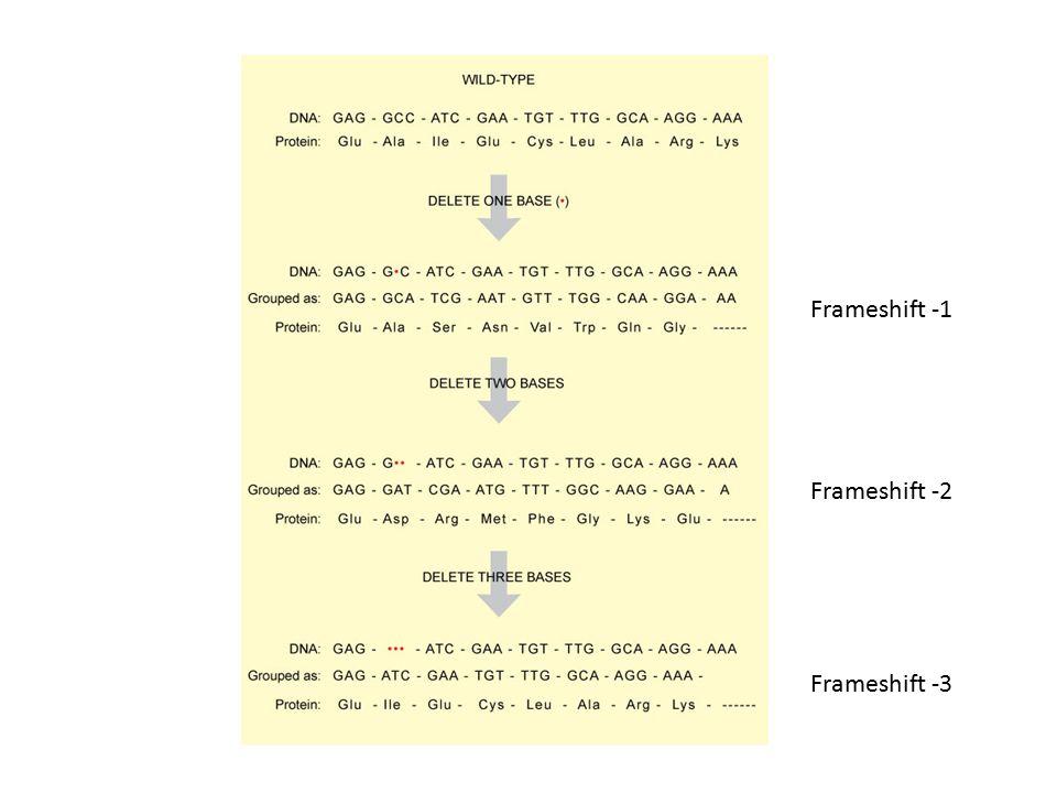Inzerce mobilního genetického elementu (transposony, retrotransposony), virů, nebo chemickými mutageny či chybou DNA polymerázy zastavení expresezvýšení exprese Inzerce