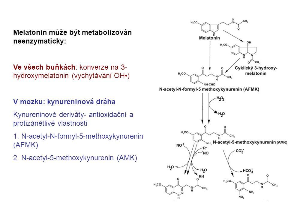 Melatonin může být metabolizován neenzymaticky: Ve všech buňkách: konverze na 3- hydroxymelatonin (vychytávání OH) V mozku: kynureninová dráha Kynureninové deriváty- antioxidační a protizánětlivé vlastnosti 1.