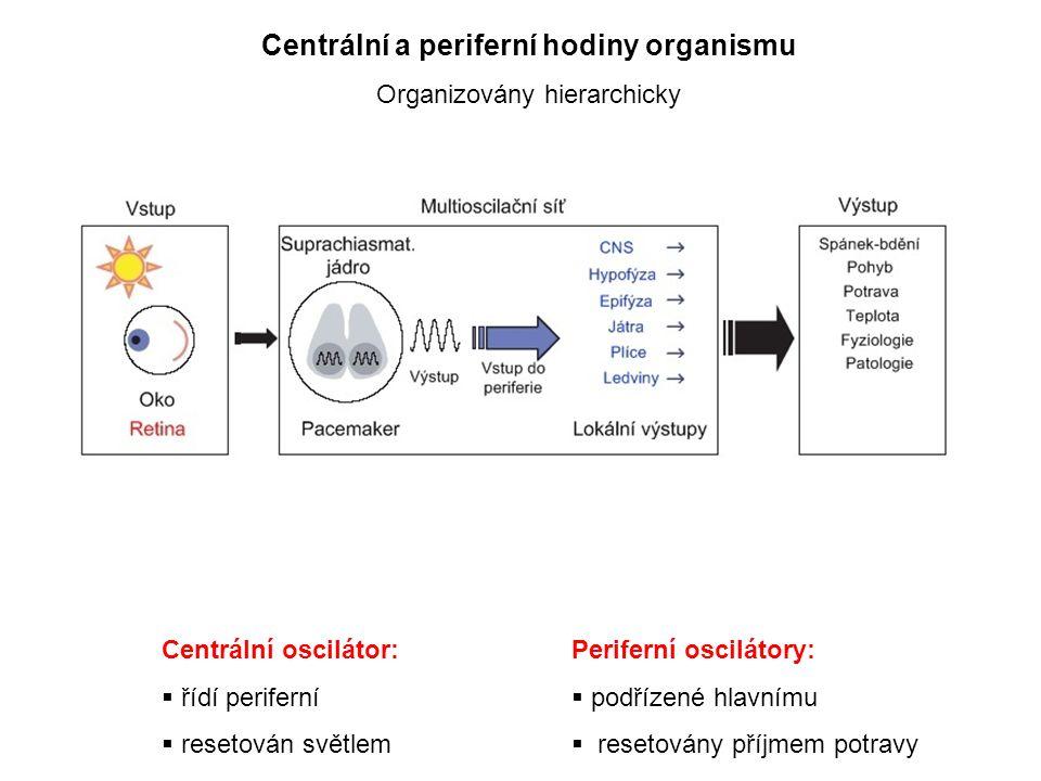 Centrální a periferní hodiny organismu Organizovány hierarchicky Centrální oscilátor:  řídí periferní  resetován světlem Periferní oscilátory:  podřízené hlavnímu  resetovány příjmem potravy