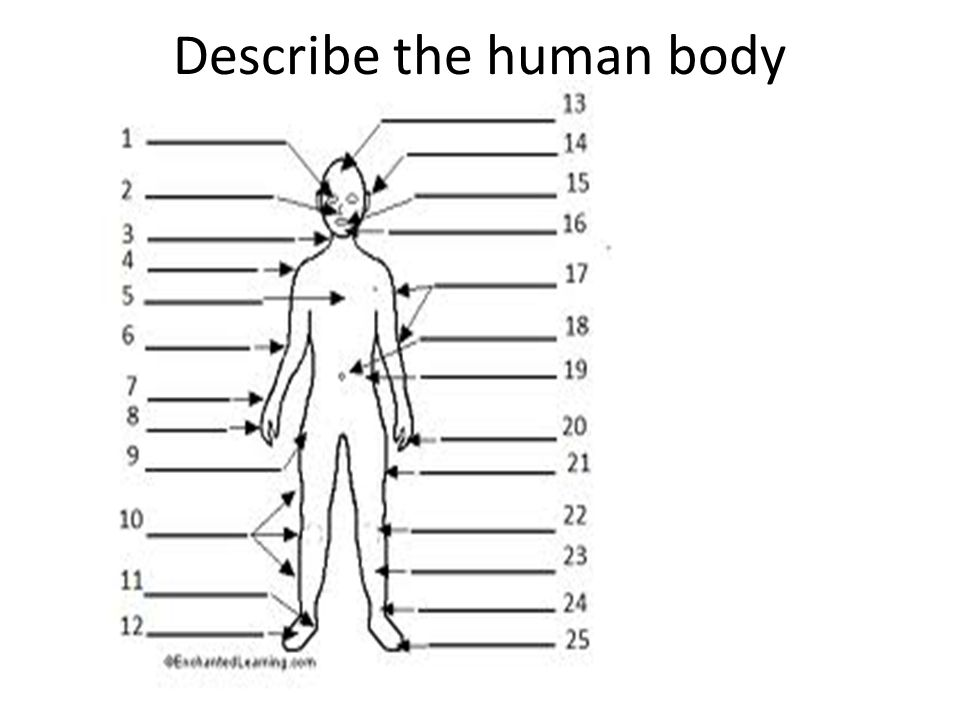 Describe the human body