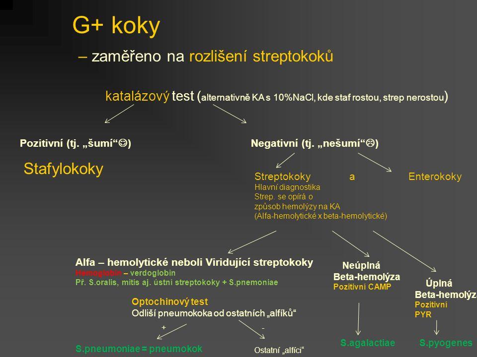 G+ koky – zaměřeno na rozlišení streptokoků katalázový test ( alternativně KA s 10%NaCl, kde staf rostou, strep nerostou ) Stafylokoky Negativní (tj.