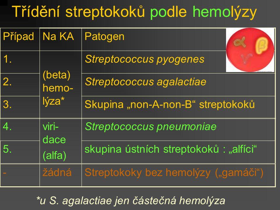 Třídění streptokoků podle hemolýzy PřípadNa KAPatogen 1.