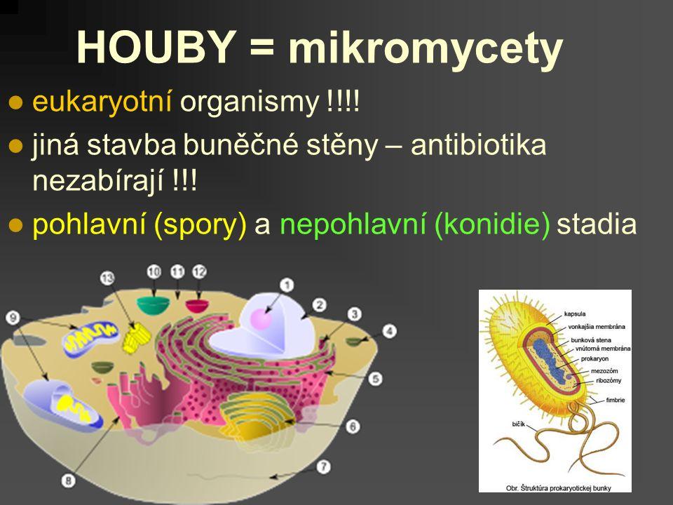 eukaryotní organismy !!!. jiná stavba buněčné stěny – antibiotika nezabírají !!.