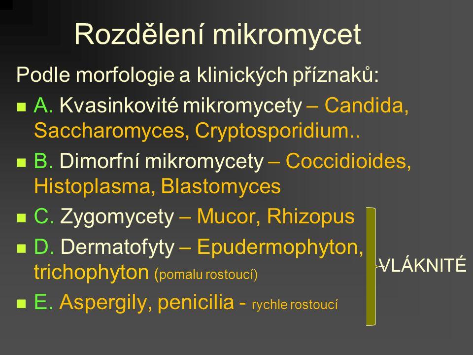 Rozdělení mikromycet Podle morfologie a klinických příznaků: A.