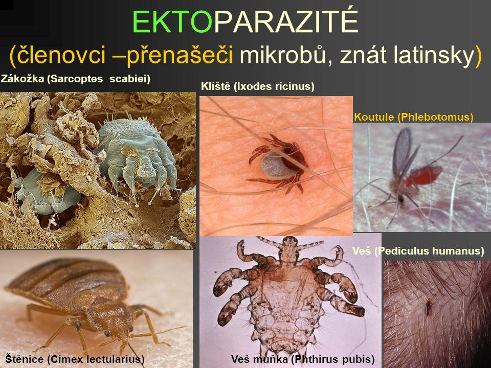 EKTOPARAZITÉ (členovci –přenašeči mikrobů, znát latinsky) Zákožka (Sarcoptes scabiei) Klíště (Ixodes ricinus) Koutule (Phlebotomus) Štěnice (Cimex lectularius)Veš muňka (Phthirus pubis) Veš (Pediculus humanus)