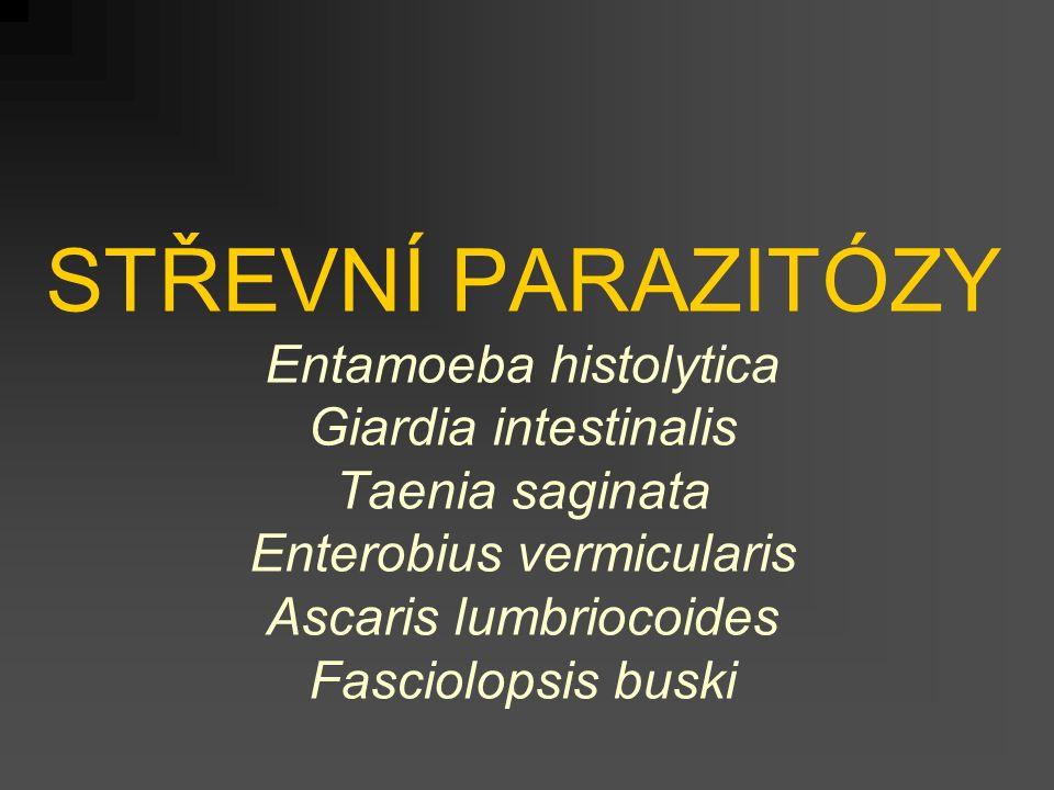 STŘEVNÍ PARAZITÓZY Entamoeba histolytica Giardia intestinalis Taenia saginata Enterobius vermicularis Ascaris lumbriocoides Fasciolopsis buski