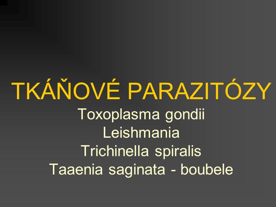 TKÁŇOVÉ PARAZITÓZY Toxoplasma gondii Leishmania Trichinella spiralis Taaenia saginata - boubele