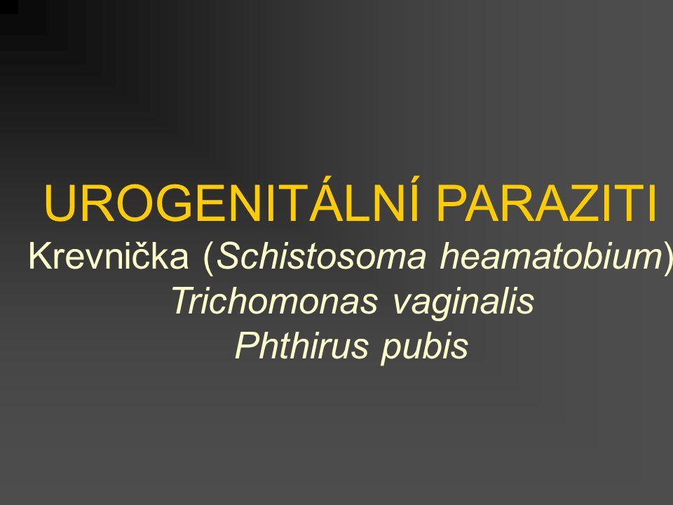 UROGENITÁLNÍ PARAZITI Krevnička (Schistosoma heamatobium) Trichomonas vaginalis Phthirus pubis