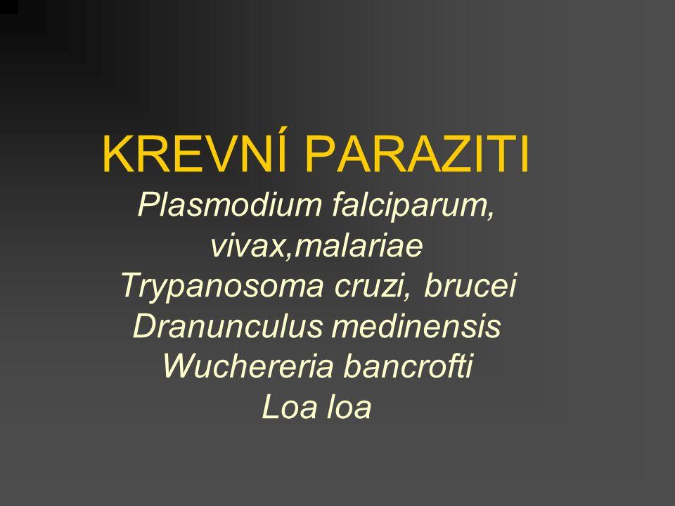 KREVNÍ PARAZITI Plasmodium falciparum, vivax,malariae Trypanosoma cruzi, brucei Dranunculus medinensis Wuchereria bancrofti Loa loa