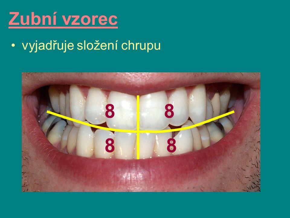 vyjadřuje složení chrupu Zubní vzorec 8 88 8